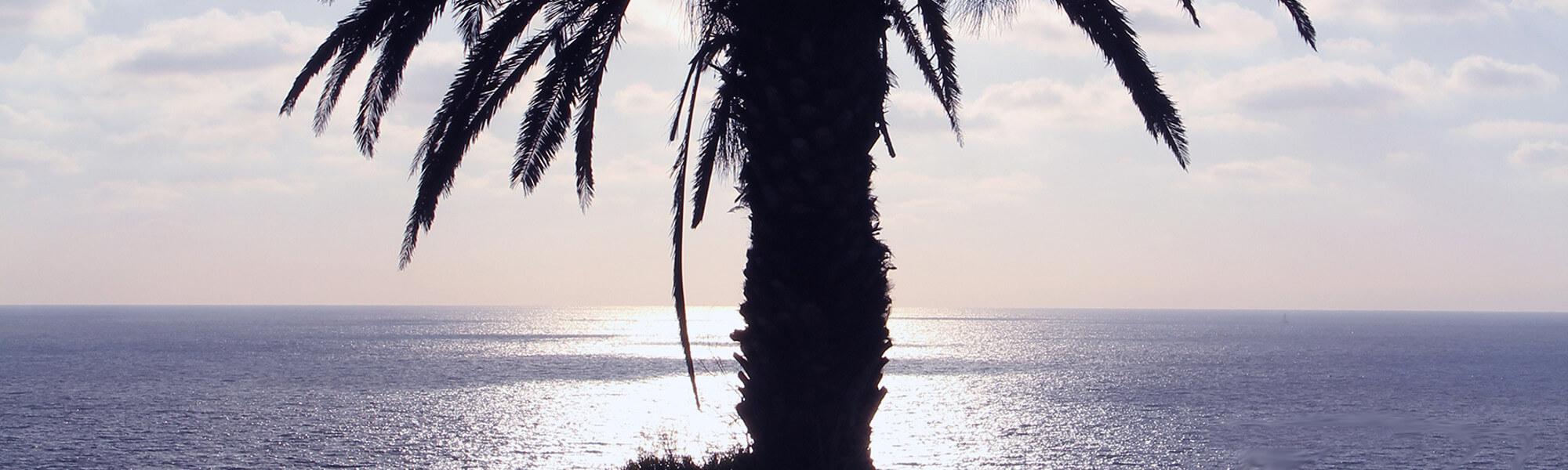 palm tree overlooking ocean